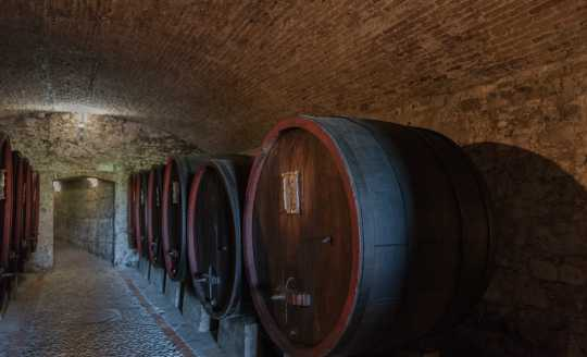 Row of wooden wine barrels lining the Machiavelli Winery cellar