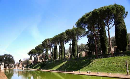 Tall trees along the ancient ruins of Villa Adriana
