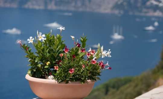 Large urn filled with flowers with the Tyrrhenian Sea in the background