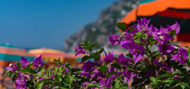 Purple flowers blooming during Spring in Italy