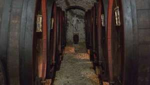 Castello Banfi wine cellar with barrels lining the walls